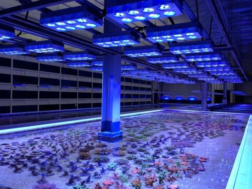 Aqua Illumination Led S Used Exclusively Above Dejong