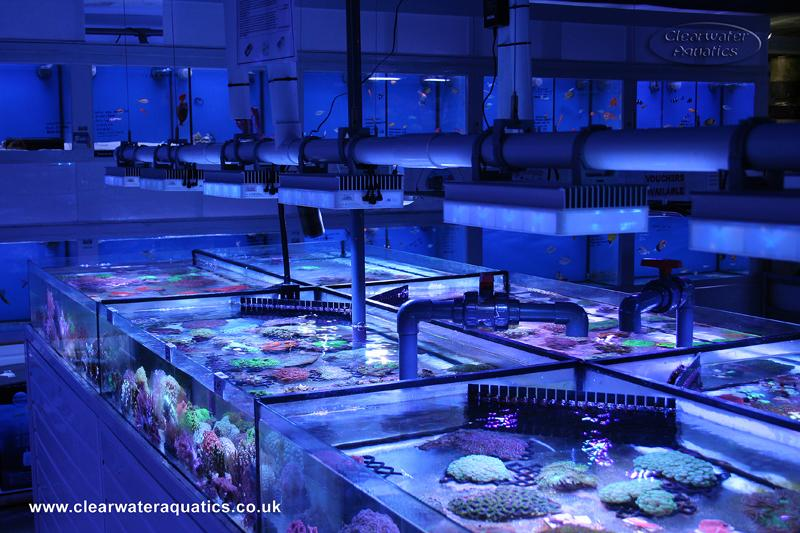 SOL's mounted in a clever way via 50mm PVC pipe clips over the coral trays at Clearwater Aquatics\