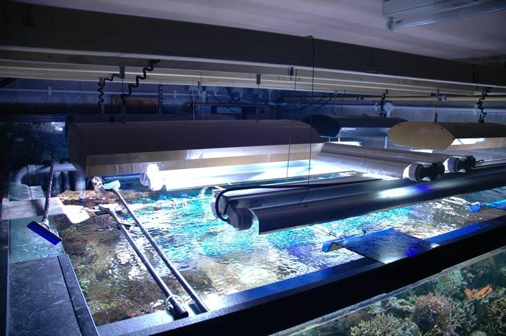 The lighting system is suspended on runners so that the lighting can be moved out of the way for maintenance of the tank