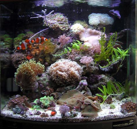 Another view of this fantastic aquarium.