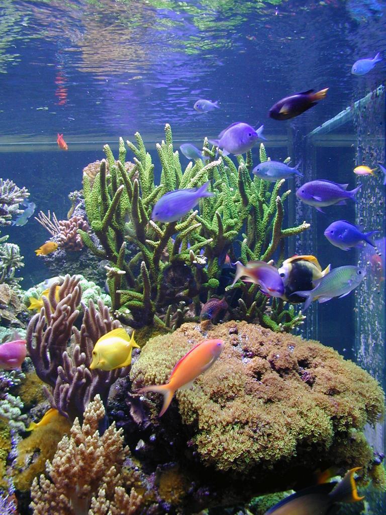 View of the aquarium prior to 2002