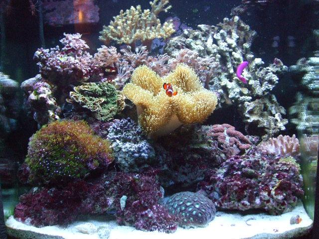 Simon's Nano cube shows exactly what can be achieved with these smaller aquariums
