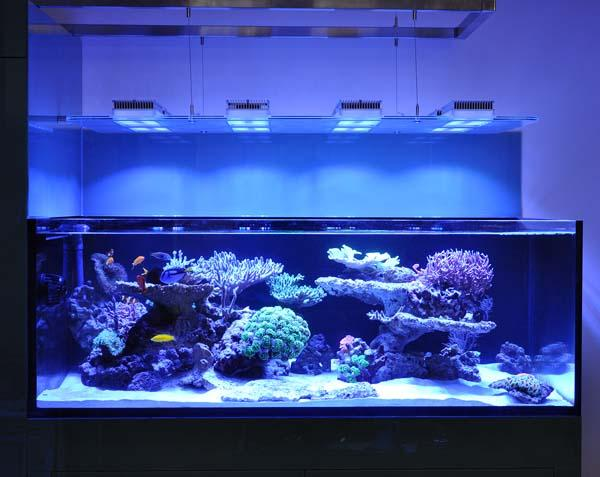 \Aquarium owners: Dana & Karla\Tank Spec: Approximately 1000L\Tank dims: 1682 x 1018 x 600  high   19mm Low Iron glass, external overflow\Running:\Deltec 3070s  skimmer\Abyss 200:  return\D&D  Salt\Lights: 8 x SOL blue, running on  controller\Cabinet: clad in coloured  glass\Water Change 10% weekly with  D&D through automated water change system\Aquarium built by Vincent at AQUARIUM CONNECTIONS\
