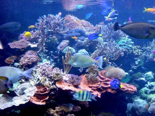 Atlantis Aquarium in Riverhead New York