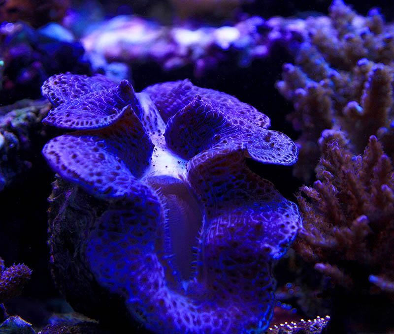 Clam doing well under AI lighting\