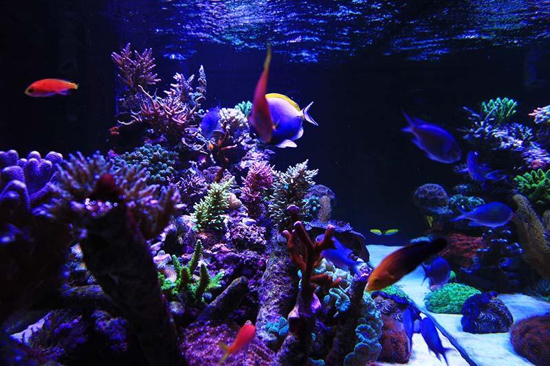 Aquarium end on\