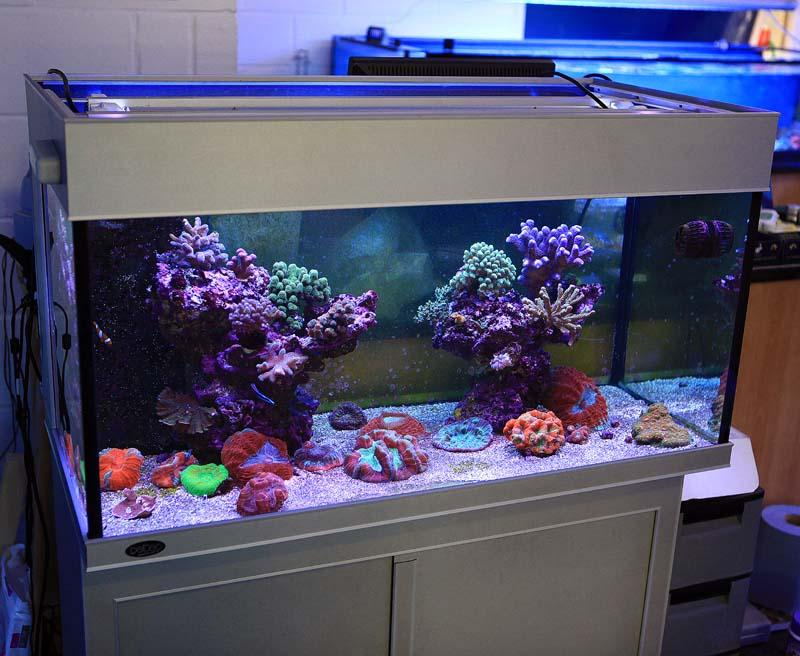 Deltec display tank set up with 4 T5 lamps and very simple sump with stunning outcome\
