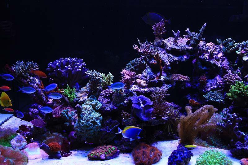 Left side of the aquarium Aug 2013\