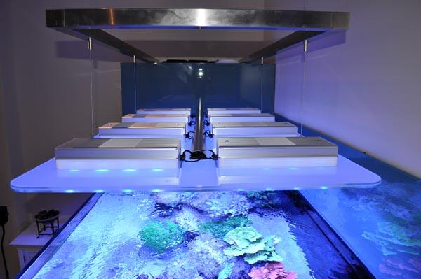 Aquarium owners: Dana & Karla\Tank Spec: Approximately 1000L\Tank dims: 1682 x 1018 x 600  high   19mm Low Iron glass, external overflow\Running:\Deltec 3070s  skimmer\Abyss 200:  return\D&D  Salt\Lights: 8 x SOL blue, running on  controller\Cabinet: clad in coloured  glass\Water Change 10% weekly with  D&D through automated water change system\Aquarium built by Vincent at AQUARIUM CONNECTIONS
