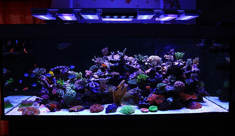 """Aquarium in Aug 2013 . A wireless SOL has been added to help light the width in the center of the aquarium as it is almost 34"""" wide and although the Vega and Hydra do very well with spreading light across this width i can increase PAR at the front with the updated arrangement\"""